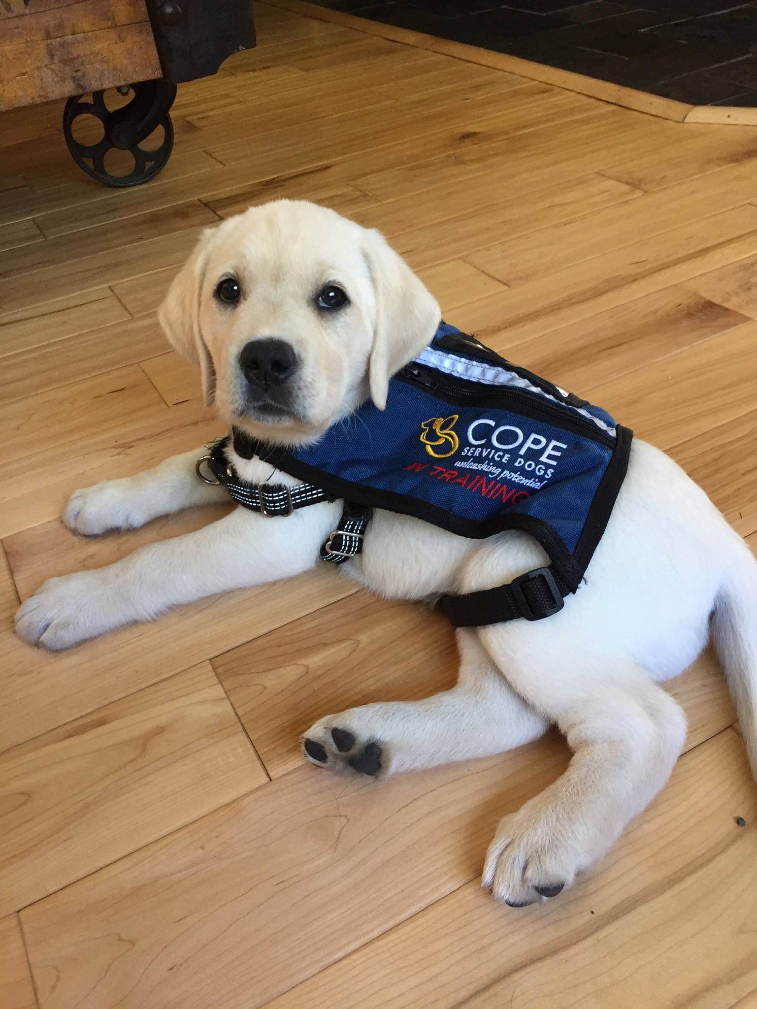 COPE Puppy Foster/Sitter Introductory Training Logo